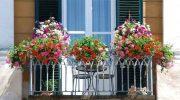 Украшаем окна живыми цветами, топ 5 вариантов