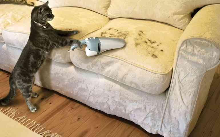 Как восстановить поцарапанный диван и что делать после этого с котом