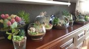 Флорариумы и кокедама — живой декор в интерьере квартиры