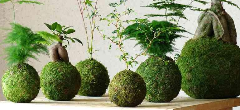 Флорариумы и кокедама - живой декор в интерьере квартиры