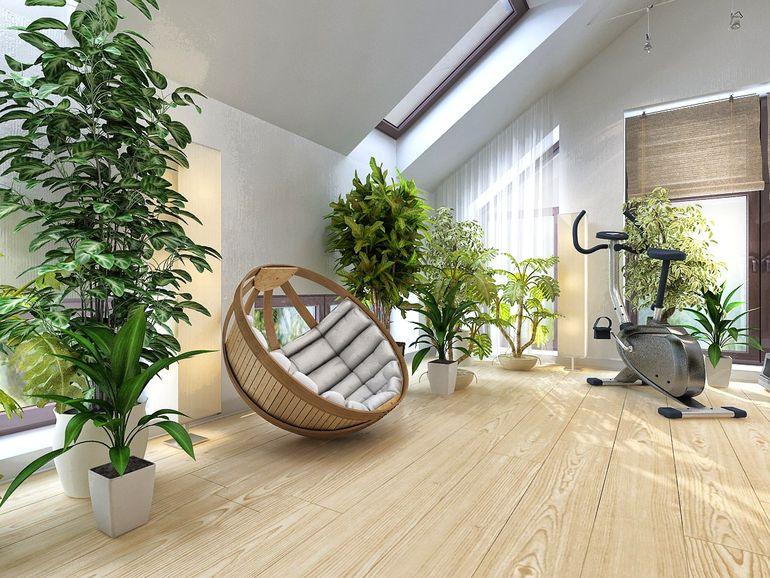 Чем грозит живая стена из растений в интерьере квартиры