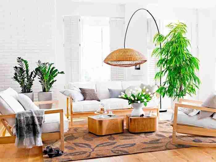Правильное размещение живых цветов в квартире