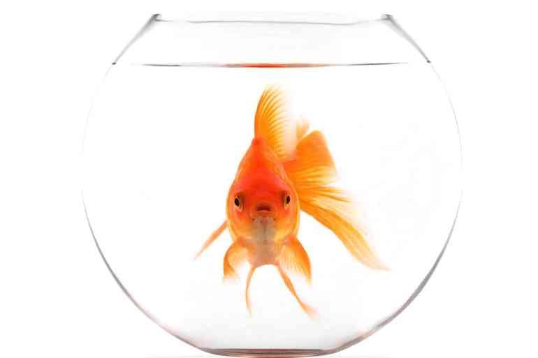 Почему аквариум так необходим в квартире