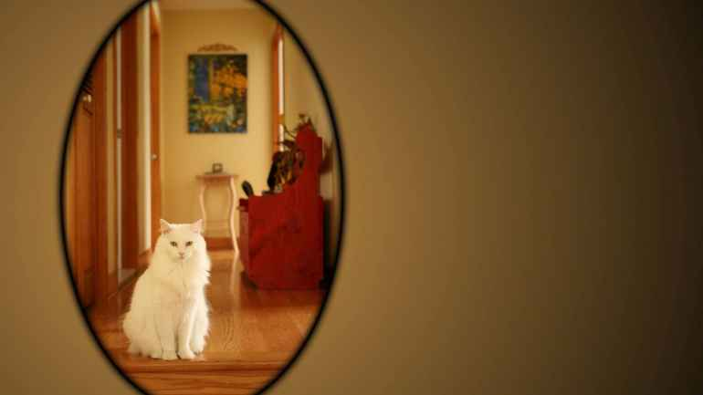 Как с помощью зеркал визуально увеличить пространство